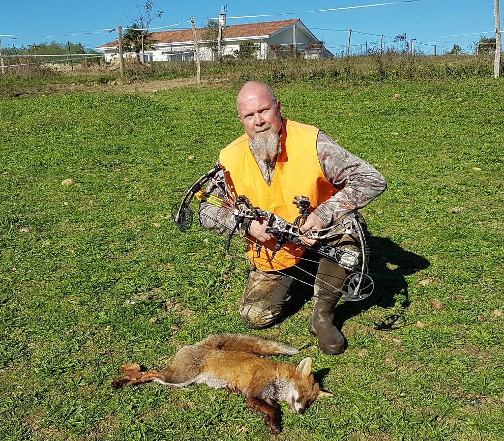 Petit renard mâle fléché en battue à Fargues à 4m, distance de fuite 0m.